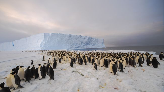 First Contact: Pictures of the Emperor Penguin Colony