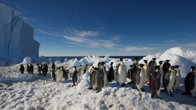 Second Visit to Emperor Penguin Colony