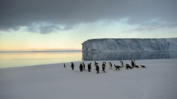 A small group of emperor penguins - International Polar Foundation