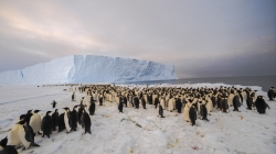 The newly-discovered 9,000-strong emperor penguin colony on Antarctica's Princess Ragnhild Coast. - International Polar Foundation/Alain Hubert