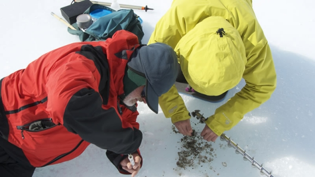 The BELDIVA team collecting samples from a cryoconite - International Polar Foundation