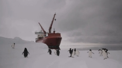 Unloading The Mary Arctica
